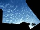 palmtreecopyweb2