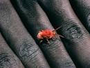 spider on hand